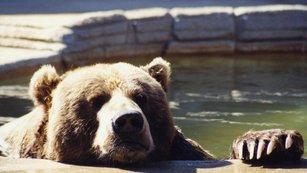 IW speciál: Světový akciový medvěd se probudil. Co je dobré vědět?