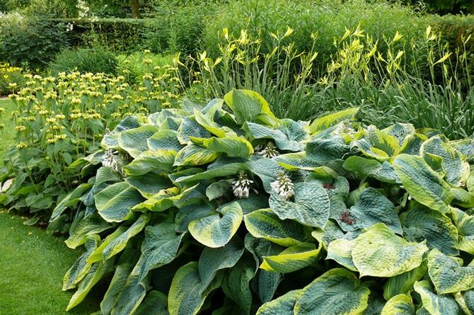 Krásná je zahrada bez škůdců