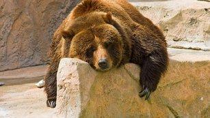 Všechno, co potřebujete vědět o medvědím trhu