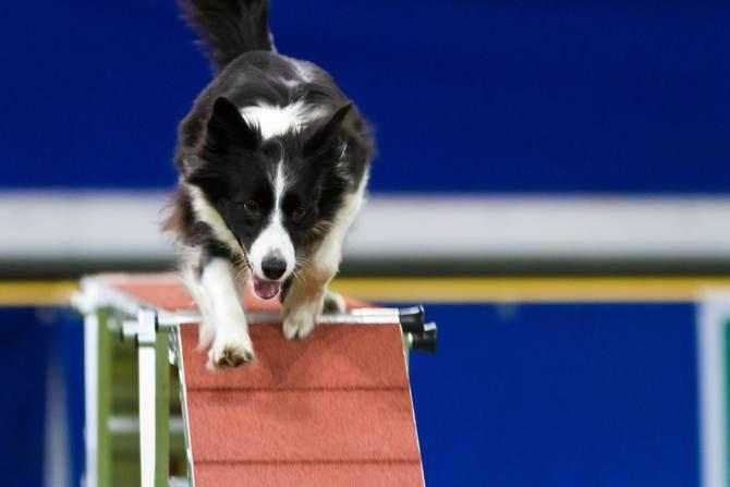 Mistrovství světa v agility