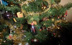 Vánoční stromeček - živý či umělý stromek, nebo strom v kontejneru?
