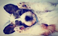 První pes v rodině: důsledná výchova přinese radost