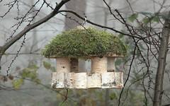 Krmte ptáky - uchráníte je před hladem a mrazem