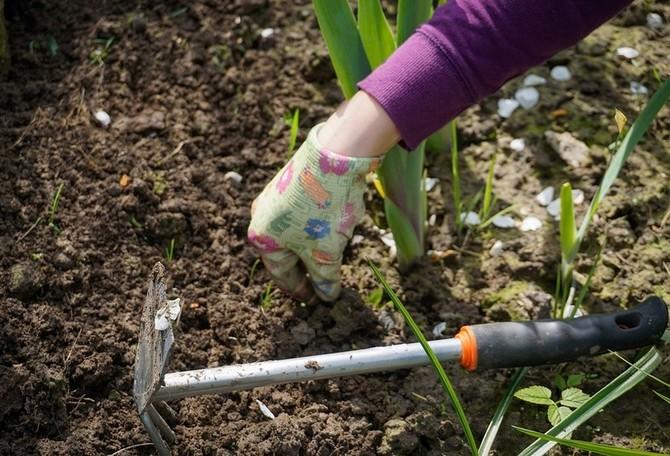 Je nezbytné řádné prokypření půdy