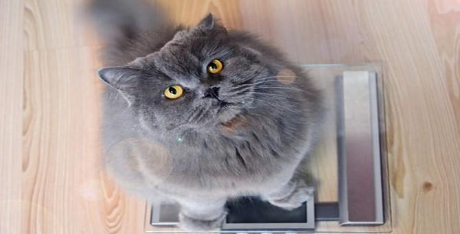 Častým problémem u koček jsou kila navíc