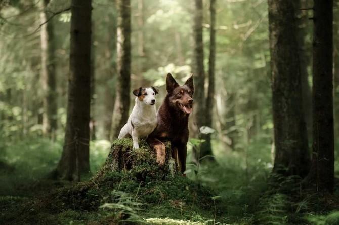Kdy se psem k veterináři kvůli klíštěti?