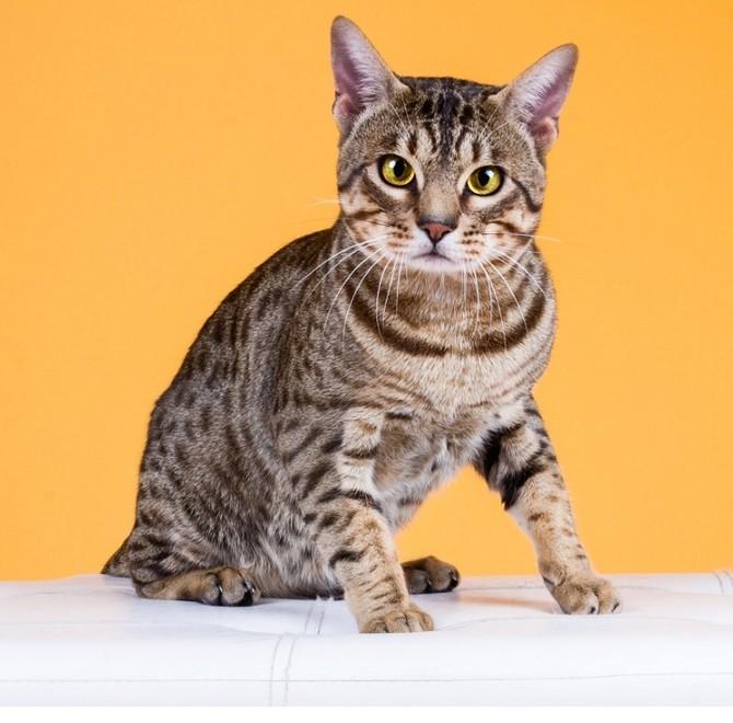 Potrava pro kočky by měla být celodenně dostupná