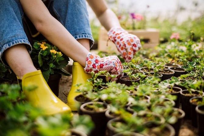 V dubnu jdou vysévat téměř všechny druhy zeleniny