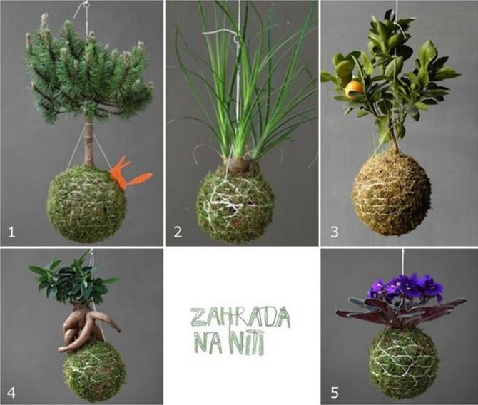 Kokedamy jsou rostliny zasazené v mechové kouli
