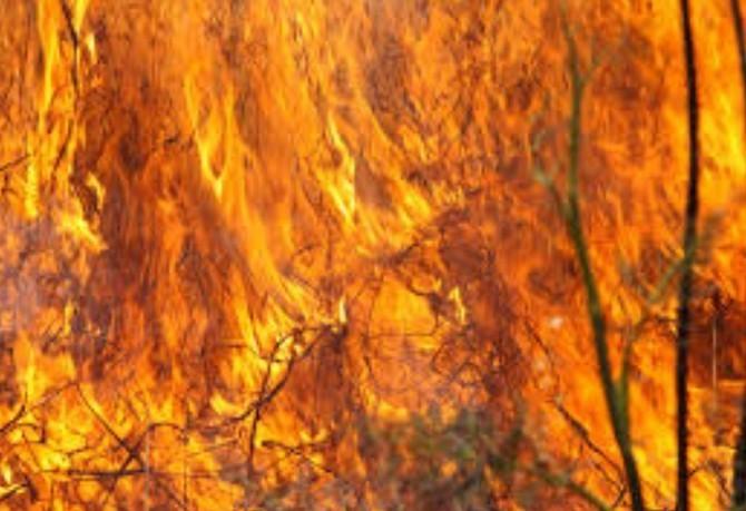 Pozor na jarní požáry a škůdce