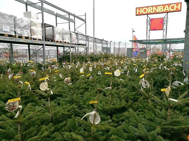 Vánoční stromky v Hornbachu