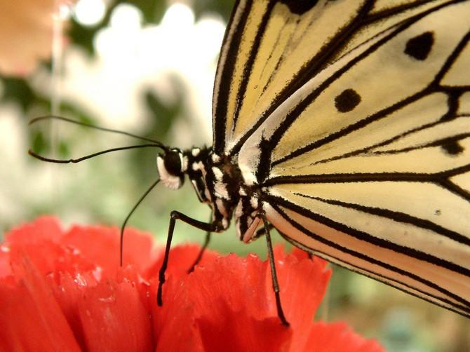 Exotický dům s motýli najdete hned za hranicemi