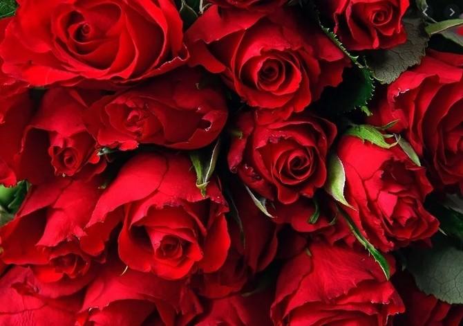 Mezi květinami převažují růže