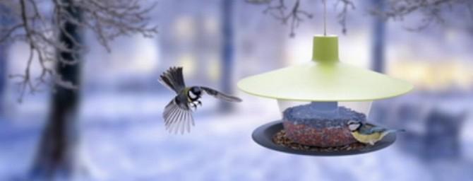 Přikrmujte v zimě ptáky, potřebují to