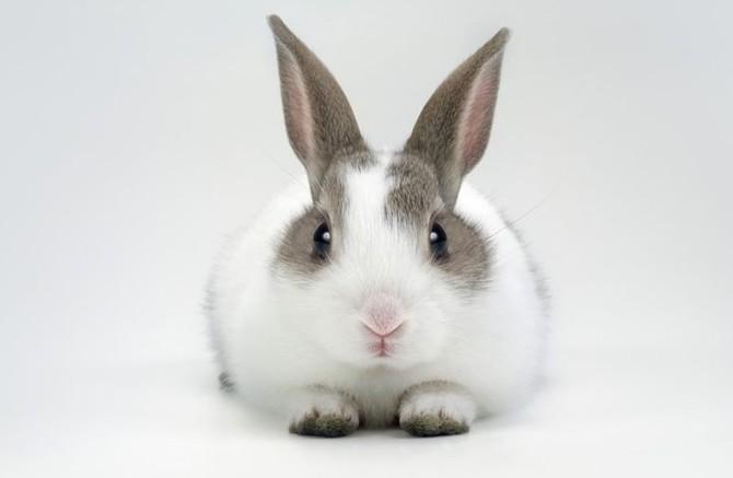 Pokud si pořídíte králíčka, tak na 6 až 9 let
