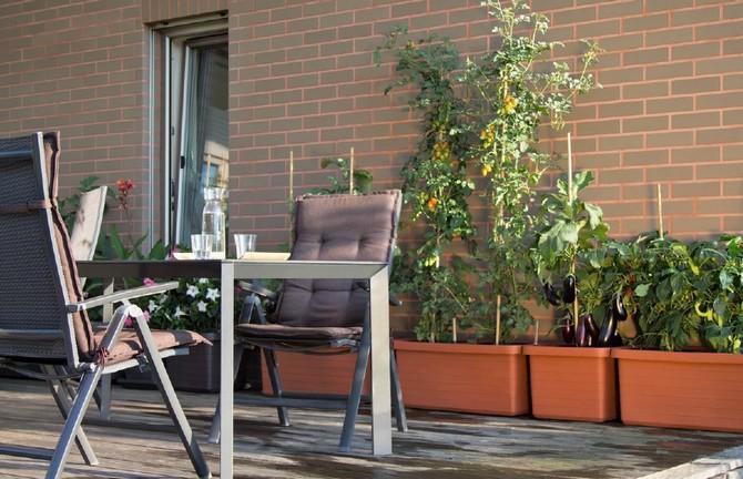 I váš balkón se může proměnit v zelenou oázu plnou dobrot