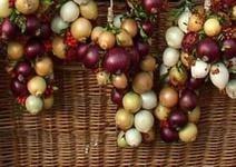 Cibule je přírodní lék i výtečná potravina s tisíciletou historií