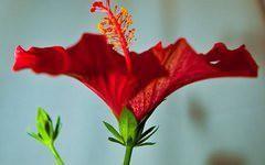 Pokojové rostliny – domov srostlinami vpůběhu staletí