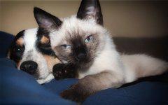 Jak správně pečovat o zuby psů a koček