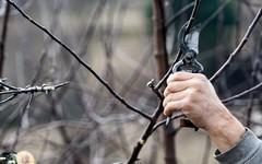 Jaké chyby nedělat při prořezáním stromů a keřů na podzim?