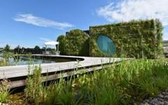 Odpověď na klimatické změny: více zelená a kompaktní města