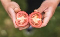 Rajčata jsou nejoblíbenější zeleninou Čechů